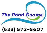The Pond Gnome