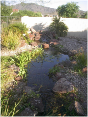 Laveen AZ Disappearing Pondless Stream by The Pond Gnome